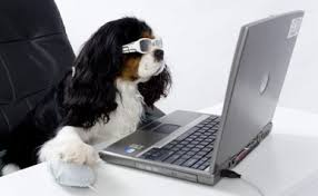 dog using a laptop